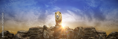 Photo  Lion at sunset. 3d rendering