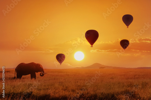 Pinturas sobre lienzo  Lonely  african elephant against the sky with balloons at sunset
