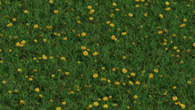 Up View Of Field Of Wild Grass And Lots Of Yellow Head Dandelions