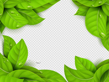 Realistic Vector Green Leaves With Drops Frame Template With Transparent Background. Illustration Of Leaf Green And Botanical Exotic Banner