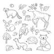 Sketch forest animals. Woodland cute baby animal raccoon elk hare woodpecker hedgehog marten fox children doodle vector hand drawn set. Illustration of animal forest, mouse and raccoon, hedgehog