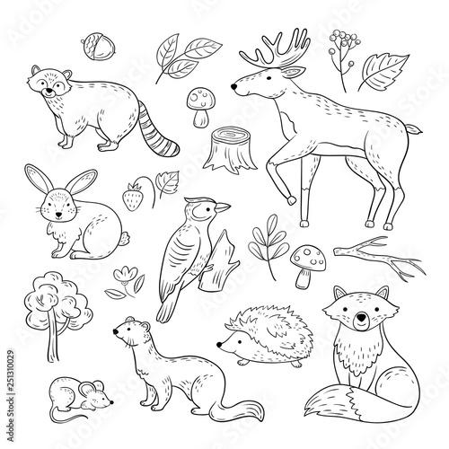 Fotografie, Obraz  Sketch forest animals