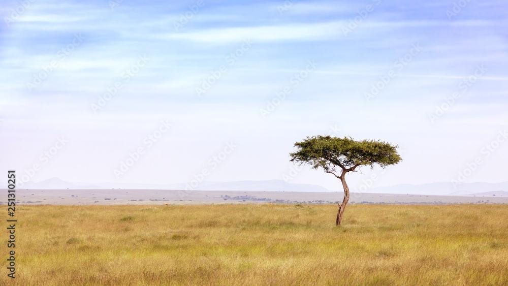 Fototapety, obrazy: Acacia tree in the Masai Mara