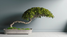 Amazing Bonsai. Isolated Bonsai