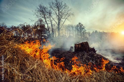Vászonkép Forest fire - environmental damage
