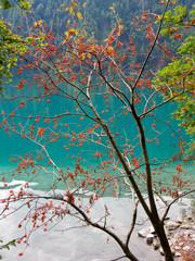 Fototapetarowan tree, sorbus aucuparia