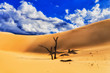 Dunes Dead Trees Blue SKy