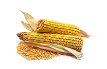 Corn Cobs And Kernels With Dry...