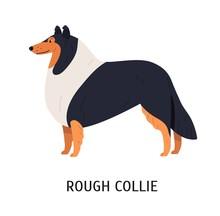 Rough Collie. Charming Herding...