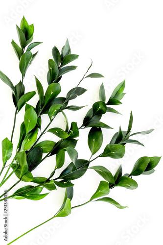 Fototapeta Spring branches with small green leaves on white background top view copy space obraz na płótnie