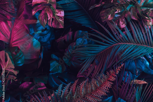 Obraz Creative fluorescent color layout made of tropical leaves. Flat lay neon colors. Nature concept. - fototapety do salonu