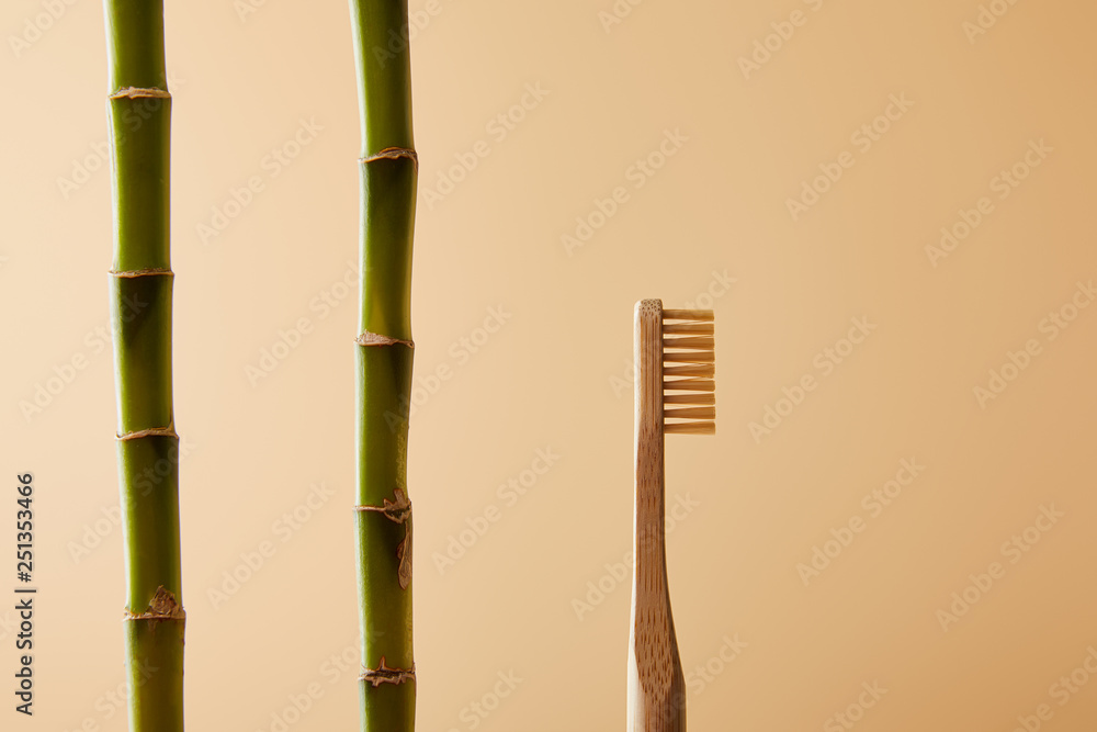 Fototapeta bamboo toothbrush and green bamboo stems on beige background