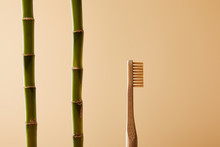 Bamboo Toothbrush And Green Bamboo Stems On Beige Background
