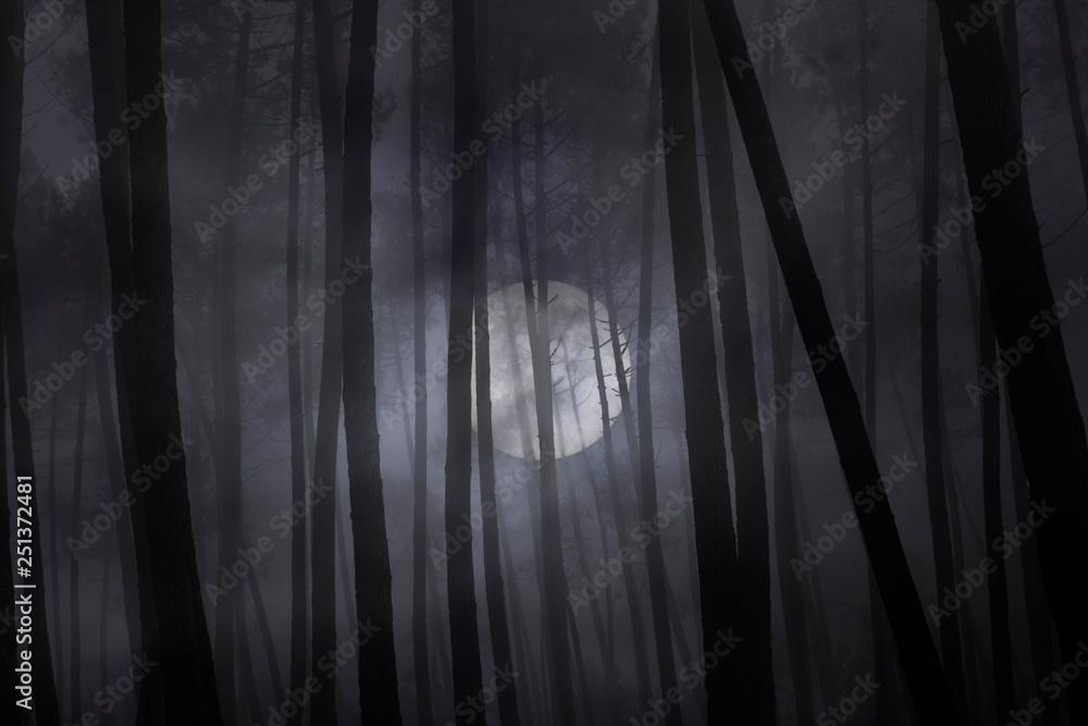 Fotografie, Obraz Foggy forest in a full moon night.
