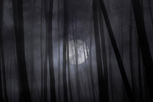 Foggy Forest In A Full Moon Night.