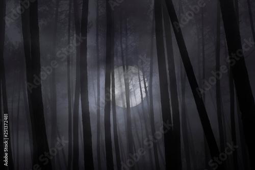 Fototapeta Foggy forest in a full moon night.