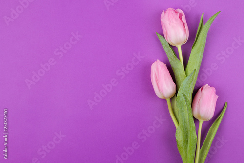 Fototapety, obrazy: A bouquet of beautiful pink tulips flowers on a trendy bright purple background. Spring. holidays. view from above. place for text. flower frame