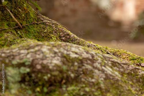 Fotografie, Obraz  moss covered stump with brick background