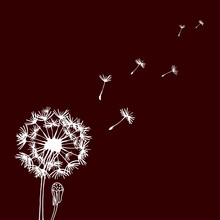 Design Of Hand Drawn Dandelion Flowers On Dark Background. Flying Blow Dandelion. Vector Graphic Flowers