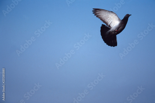 Photo piccioni in volo