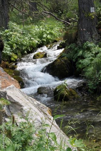 Fototapeten Forest river Lac des Sagnes