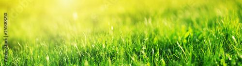 Obraz Fresh green grass background - fototapety do salonu
