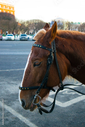 Fotografía  Profile of funny cute brown horse waiting for the passengers on the city street