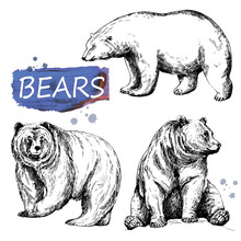 Set Of Hand Drawn Sketch Style Bears Isolated On White Background. Vector Illustration.