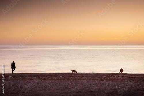 dog walker at sunset Canvas Print