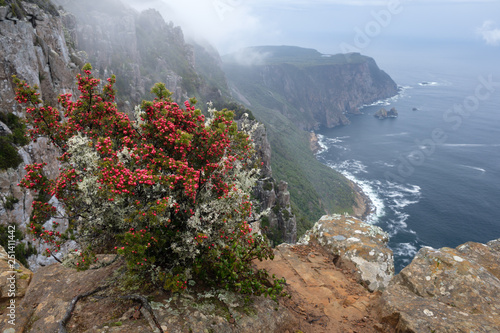 Cape Raoul in foogy weather with red berry-bush in front, Tasmania Canvas Print
