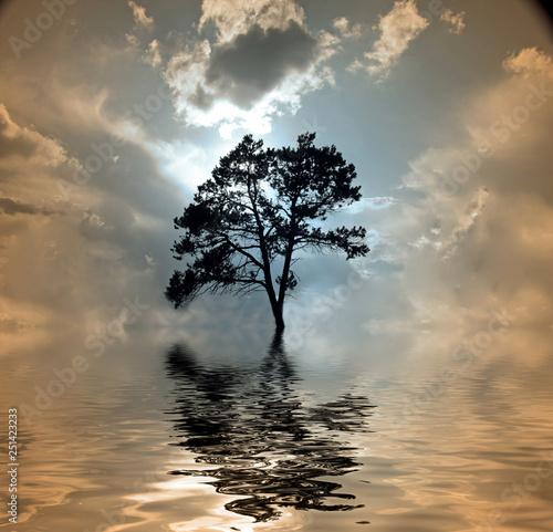 Tree Fotomurales