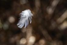 Weiße Feder Fliegt Durch Die Luft Mit Brauenen Hintergrund