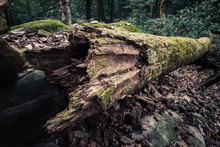 Natural Dead Tree In Jungle
