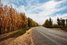 Argentina, Lago Posadas, Gravel Road With Autumnal Trees