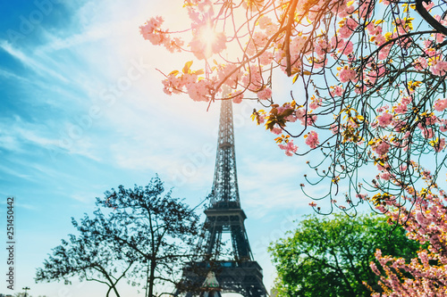 Cherry blossom branch with Eiffel Tower on background. Wallpaper Mural