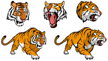 Tiger Vector Set , Vector Graphic To Design