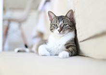 Cute Cat Relaxing On Home Floor