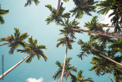 Areca nut or Betel Nuts palm tree with blue sky and clouds background in Thailand Canvas Print