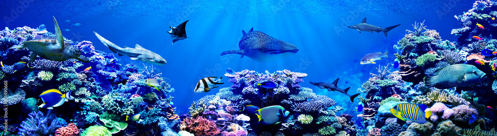 Fototapety, obrazy: Panorama background of beautiful coral reef with marine tropical fish. Whale shark, Hammerhead shark, Zebra shark and sea turtle visited here