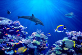 Fototapeta  - Vibrant background of colorful coral reef with beautiful marinefish, Whale shark, Manta ray and Dolphin