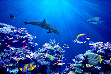 Panel Szklany Delfin Vibrant background of colorful coral reef with beautiful marinefish, Whale shark, Manta ray and Dolphin