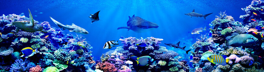 FototapetaPanorama background of beautiful coral reef with marine tropical fish. Whale shark, Hammerhead shark, Zebra shark and sea turtle visited here