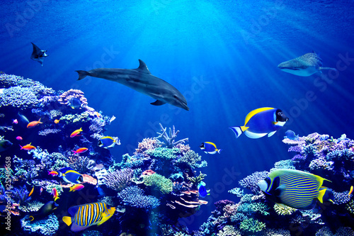 Dauphin Vibrant background of colorful coral reef with beautiful marinefish, Whale shark, Manta ray and Dolphin