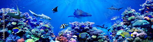Poster Koraalriffen Panorama background of beautiful coral reef with marine tropical fish. Whale shark, Hammerhead shark, Zebra shark and sea turtle visited here