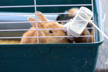 Rabbits Drinking Water From Fe...