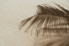 Copy Space Of Shadow Palm Leaf On Sand Beach Texture Background.