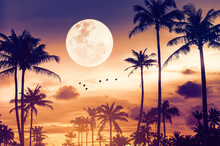 Tropical Night. Full Moon And ...