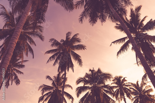 Foto auf AluDibond Hochrote Copy space of tropical palm tree with sun light on sky background.