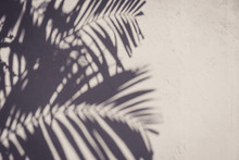 Copy Space Of Shadow Palm Leaf On Stone Wall Texture Abstract Background.