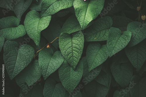 Fotografia  Tropical nature green leaf texture abstract background.